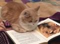 gatto in biblioteca